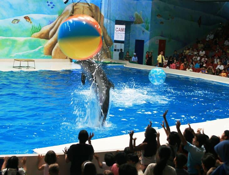 Delfíni v Dubaji